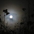 Winter Moon by Michael John