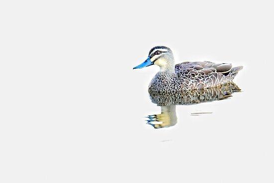 archetypal duck by nadine henley