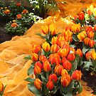 Orange Dream by karina5