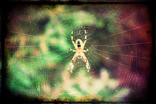 Spider by PhilM031