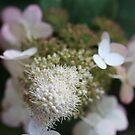 Hydrangea by decorartuk