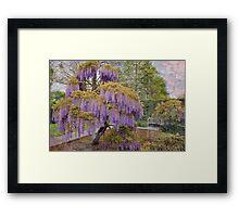 Wisteria Tree Framed Print