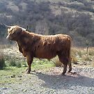 Highland Cow by impossiblesong