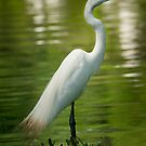 Egret Profile by Joe Jennelle