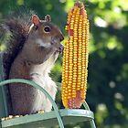 Get your own corn, this ear is MINE! by Kristy  Dorris