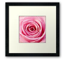 Pink Rose with Water Droplets Framed Print