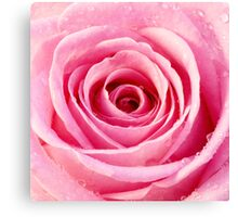 Pink Rose with Water Droplets Canvas Print