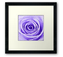 Purple Rose with Water Droplets Framed Print