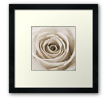 Sepia Rose with Water Droplets Framed Print