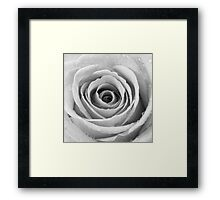 Silver Rose with Water Droplets Framed Print