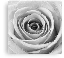Silver Rose with Water Droplets Canvas Print