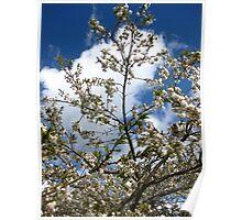 cherry blossom sky series image 1 Poster