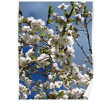 cherry blossom sky series Image 4 Poster