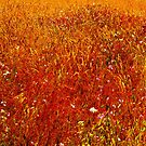 Meadow III by Ascender Photography