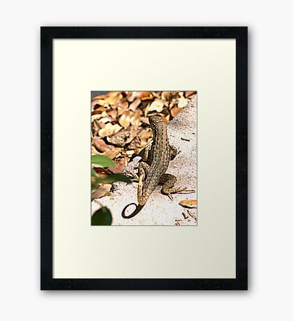 They're back.... Framed Print