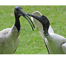 Mom please feed me i an hungry! Photographic Print