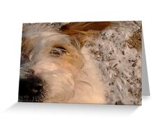 Curious dog is watching me! Greeting Card
