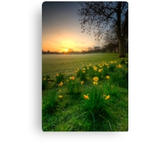Daffodils & Sunrise At The Park Canvas Print