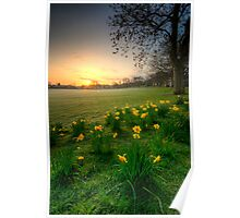 Daffodils & Sunrise At The Park Poster