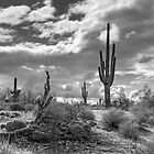 Sonoran Desert in Black and White  by Saija  Lehtonen