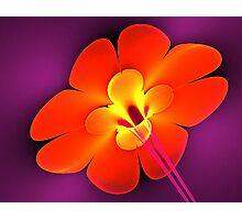 Dynamite Flower Photographic Print