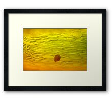 lost wandering in the flow Framed Print