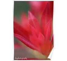 red in bloom (unframed) Poster