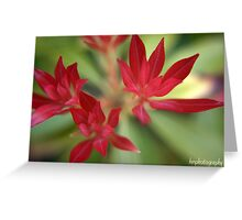 red (unframed) Greeting Card