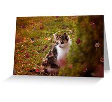Autumn Kitten  Greeting Card