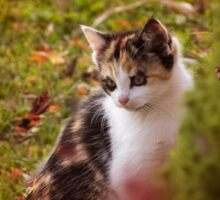 Autumn Kitten  Sticker