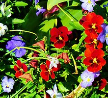 Red & Purple Flowers by Cynthia48
