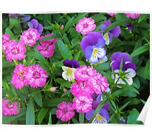 Pink & Purple Flowers Poster