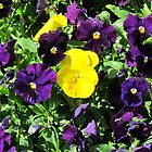 Purple And Yellow Flowers by Cynthia48