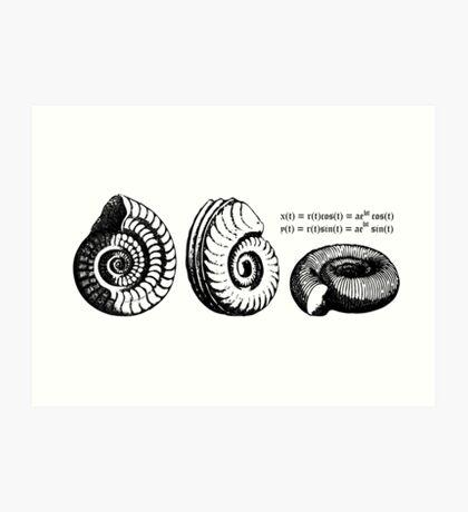 Math Spiral Shells Art Print