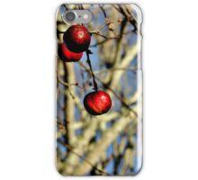 Nature's Seasonal Ornaments iPhone Case/Skin