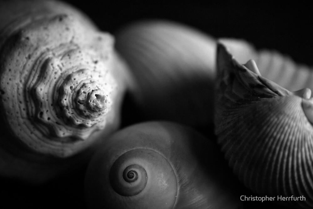 Shells by Christopher Herrfurth