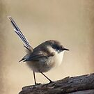 Blue Wren by Jodi Turner