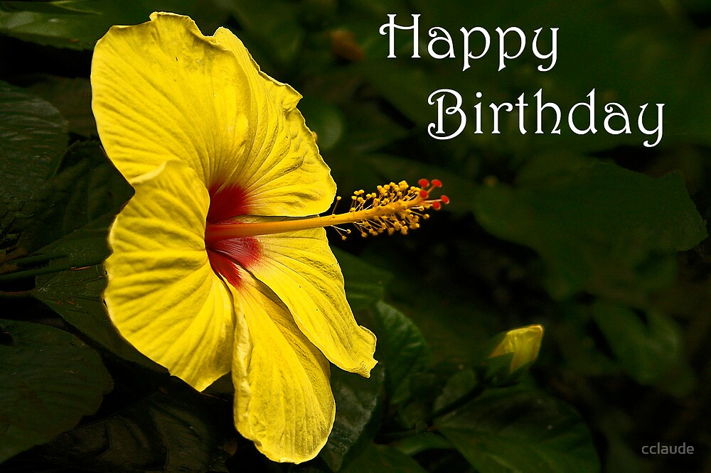 Hibiscus Birthday Card by cclaude