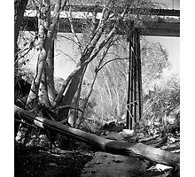 Creek Walk Photographic Print