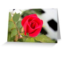 Roses Are In Bloom Greeting Card