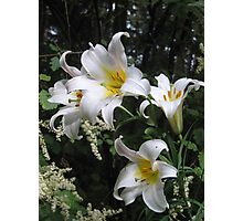 Lilies and Lace Photographic Print
