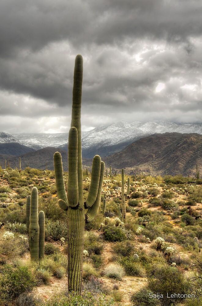It Does Snow in the Desert by Saija  Lehtonen