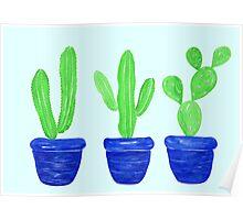 Cacti Trio - Blue Poster