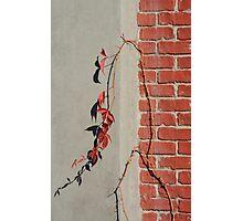 Urban Red Wall Vine Photographic Print