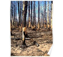 Forest Fire Poster