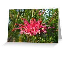 Grevillea Lavendulacea, straight ahead. Greeting Card