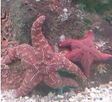 Under the Sea by Virginia-speaks