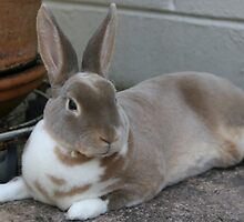 Shanti Bunny Love by musicbyeluv