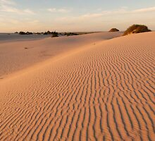 Lake Mungo Sandhills - Early Morning by Geoffrey Higges