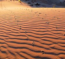 Lake Mungo Sandhills - Dingo Tracks? by Geoffrey Higges